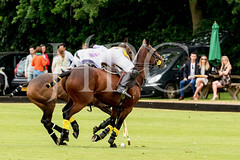 © 2017 Photographs by Robert Piper- All Rights Reserved 695 _ (Ham Polo Club) Tags: jacaranda challengematch vendetta 2017the london polo club tw107ah england gbr