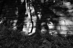 Afternoon Light III_bw (Joe Josephs: 3,166,284 views - thank you) Tags: centralpark nyc newyorkcity travel travelphotography joejosephs parks peaceful quiet riversidepark tranquil urbantravel urbanexlporation urbanparks â©joejosephs2017 blackandwhitephotography blackandwhite trees noperson light fineartphotography fineartprints ©joejosephs2017