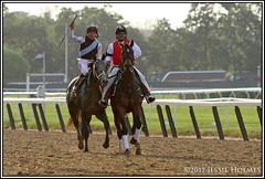Tapwrit (Spruceton Spook) Tags: horseracing horses belmontpark tapwrit belmontstakes