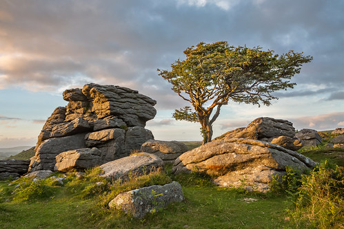Dartmoor (matrobinsonphoto) Tags: dartmoor saddle tor hay haytor rocks rocky outcrop hawthorn tree weathered weather dramatic sky clouds moody sunset golden hour landscape nature natural light sun set sunlight countryside outdoors rural scenic summer