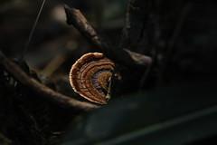 A Caminho do Poção de Cosmópolis - SP (nathaliasrocha) Tags: meuolharfala cogumelo mata