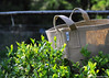 Harvesting Green Tea with Root Pouch (Katsushige Bon Terada) Tags: rootpouch teapicking harvest ルーツポーチ