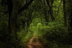 (nettisrb) Tags: wald forrest weg path natur landschaft landscape waldweg