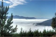 Sea of Cloud (Trains In Tasmania) Tags: australia tasmania mount lloyd derwentvalley mountdromedary fog mist clouds pines pinetree sky landscape scene vista hills trainsintasmania stevebromley ef35350mm13556lusm