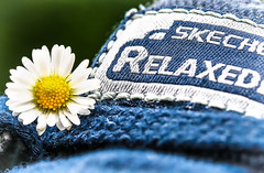Macro Mondays - Relaxation (that Geoff...) Tags: macromondays relax relaxed relaxation shoes daisy flower flores fleur garden jardin closeup petals shoe skechers relaxedfit blue lace laces canon 70d stitches stitching