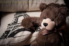 Oh, That Paris (HTBT) (13skies) Tags: happyteddybeartuesday teddybeartuesday bear parison parisfrance eiffeltower tower tall pillow pillowtalk brown brownbear comfort sitting htbt
