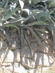 Finca del Nino summer 2017 (LindseyS2008) Tags: fincadelnino periana cantueso cactus shadow wall