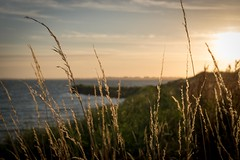 View on the Markermeer (North Holland, the Netherlands) (http://www.paradoxdesign.nl) Tags: markermeer ijsselmeer west friesland noord holland netherlands sunset zonsondergang grass waterside waterkant nederlands nederland