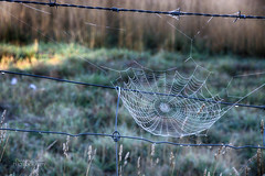 Spiders web (ChrisKirbyCapturePhotography) Tags: spiderweb dew fenceline adelaidehills chriskirbycapturephotography