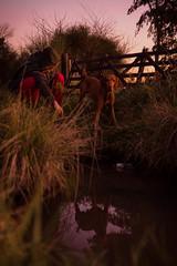 Miroir (julietacarrillo8) Tags: dog can fiel leal perro lago pasto