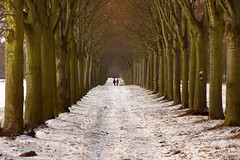 shades of winter (JoannaRB2009) Tags: winter path alley avenue hesse hessen snow tree trees people cold walk nature germany deutschland