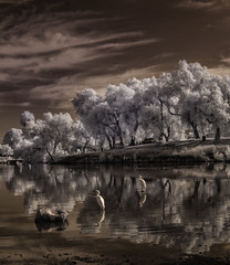 Reflecting On Egrets At Lindo Lake (Bill Gracey 15 Million Views) Tags: ir infrared infraredphotography convertedinfraredcamera trees clouds water reflections egrets composition nature naturalbeauty lindolake
