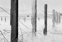 Greenville Road (Wayne-K) Tags: bw california film greenvilleroad hoyak2yellowfilter ilford ilfordxp2super400 livermore nikon nikonfm2 windpower windmills nikon105mmf25ais