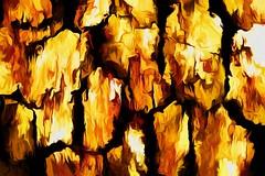 untitled (larrynunziato) Tags: macro treebark texture tone experimental abstract