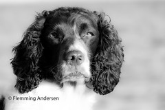 ZigZag (Flemming Andersen) Tags: draget nature water dog pet outdoor hund hebojebi seaside animal hurupthy northdenmarkregion denmark dk