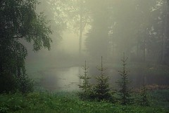 Misty pond (janrs7) Tags: wildnature nature nordicnature pond misty mist fog rain water trees green mystical sonyilc6000 sonyemount55210mm june