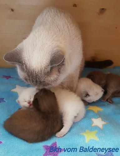 4 Kitten wurden am 7.4.2017 geboren