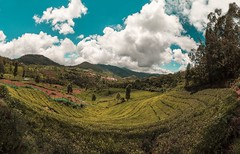 Fishy View (malhotraXtreme) Tags: ooty coonoor nature landscape love travel trip tamilnadu india south green color tone sky shadow tea garden teal view mountain bike