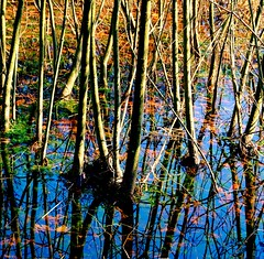 No Begin...No End (barbara_donders) Tags: eindeloos prachtig mooi beautifull magical forest bos bomen trees takken brenches kleurrijk colorful colors herfst autumn reflection reflectie water weerspiegeling groen green nature natuur