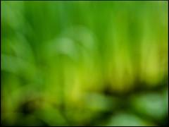 20170701-045 (sulamith.sallmann) Tags: abstract abstrakt background blur green grün hintergrund unscharf brandenburg deutschland deu sulamithsallmann