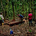 Cutting timber thumbnail
