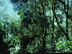 Jardin (Ant)