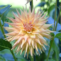 (Mauro e Irene) Tags: sigurtà fiore flower flor yellow giallo amarillo nikon d3100