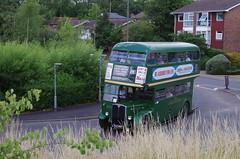 IMGP1974 (Steve Guess) Tags: leatherhead surrey england gb uk lcbs london transport country bus vintage preserved historic aec regent iii rt