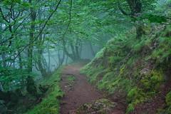 Basoko sarrera (joxelu.) Tags: nafarroa navarra euskalherria basquecountry niebla nature