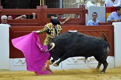 Raging Bull (Fotomondeo) Tags: elfandi toro torero toros plazadetoros corridadetoros matador spain españa alicante alacant lashoguerasdesanjuan fogueres bull bullfight bullfighter bullring