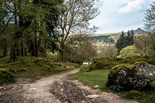 Track through Narrator Farm, Dartmoor - NK2_3618