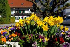 In Oberau