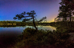 The September Moon Set (ZoeEnPhos) Tags: tyresta nationalpark tyrestanationalpark moonset stars starrynightsky sky night lake freshwaterlake pinetree landscape canonef14mmf28lusmii wideangel europe sweden bonsai tall sjö stjärnor stjärnhimmel spegelblank reflexions himmel månensnedgång
