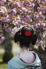 Maiko_20170419_69_29 (kyoto flower) Tags: shoseien garden fukuno kyoto maiko 20170419 舞妓 渉成園 ふく乃 京都 paulvanderveer maikofukuno japan japanesegarden karyukay kagai sakura kimono miyagawacho kawayoshiokiya kanzashi obi openmatome flowertourism