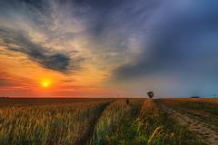 Another Way (M-Z-Photo) Tags: geslau bayern deutschland de hdr felder sonnenuntergang abendstimmung feldweg wolken himmel abendrot spuren getreide