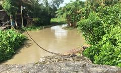 Myanmar, Ayeyarwady Region, Pyapon District, Dedaye Township, Kyon Thin Village Tract (Die Welt, wie ich sie vorfand) Tags: myanmar burma bicycle cycling ayeyarwadyregion ayeyarwady irrawaddy delta pyapondistrict pyapon dedayetownship dedaye kyonthin lizard