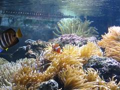 IMG_0245 (Alejandro Perez M.) Tags: medellin parqueexplora acuario