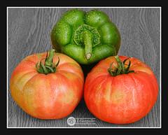 La Huerta en Casa (J.Gargallo) Tags: tomate tomates tomatoes pimento huerta hortalizas rojo verde framed castellón comunidadvalenciana canon españa eos eos450d canon450d tokina tokina100mmf28atxprod