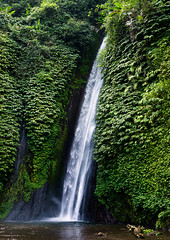 Munduk waterfall, Bali island, Munduk, Indonesia (Eric Lafforgue) Tags: asia bali bali1445 balinese cascade cascades cataract cataracts countryside day daylight east exteriors falls flow flowing flows green indonesia indonesian landscape landscapes munduk nature nopeople outdoors stream streaming streams tourism vertical water waterfall waterfalls waters baliisland