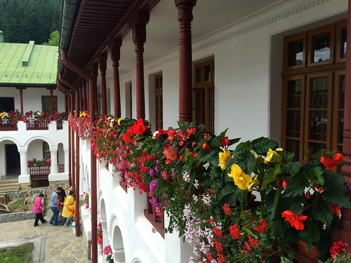 Mostly Begonias and Geraniums
