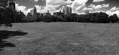 Sheep Meadow III _ b&w (Joe Josephs: 3,166,284 views - thank you) Tags: centralpark nyc newyorkcity travel travelphotography joejosephs parks urban urbanexlporation urbanparks â©joejosephs2017 ©joejosephs2017 blackandwhitephotography blackandwhite sheepmeadow centralparksheepmeadow peaceful tranquil urbanlandscapes panoramas panoramic