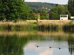 am Angelhäuser Teich (germancute) Tags: nature outdoor park plant pond teich landscape landschaft thuringia thüringen