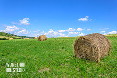 Idyllic farm field (WDnet) Tags: hay field bales bale farm landscape straw harvest wheat blue agriculture sky summer farming golden meadow round rural yellow countryside nature land crop grass fields cloud food natural scenery outdoor agricultural country scenic season haystack harvesting farmland green pasture cows europe mountains idyllic beautiful america canada d3100