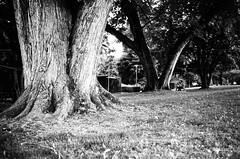 an afternoon in the park (gato-gato-gato) Tags: 35mm asph ch iso100 ilford ls600 leica leicamp leicasummiluxm35mmf14 leicasummiluxm35mmf14asph mp messsucher noritsu noritsuls600 pfäfers pizol schweiz strasse street streetphotographer streetphotography streettogs suisse summilux svizzera switzerland wetzlar zueri zuerich zurigo z¸rich analog analogphotography aspherical believeinfilm black classic film filmisnotdead filmphotography flickr gatogatogato gatogatogatoch homedeveloped manual mechanicalperfection rangefinder streetphoto streetpic tobiasgaulkech white wwwgatogatogatoch zürich manualfocus manuellerfokus manualmode schwarz weiss bw blanco negro monochrom monochrome blanc noir strase onthestreets mensch person human pedestrian fussgänger fusgänger passant
