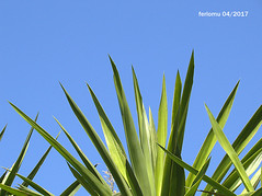 Almería. Roquetas. 17.CR2 (ferlomu) Tags: almeria andalucia ferlomu naturaleza roquetasdemar