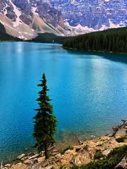 Solitary - iPhone (Jim Nix / Nomadic Pursuits) Tags: iphone snapseed travel alberta canada banff morainelake sunset tree reflections glacial glacier apline lake
