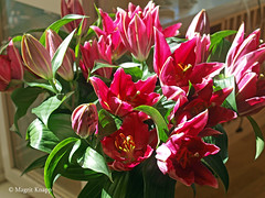 Rote Lilien (magritknapp) Tags: lilien rot lilies red lily rouge lirio rojo lírio vermelhom giglio rosso