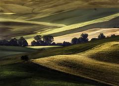 The Tuscan countryside (Massetti Fabrizio) Tags: tuscany toscana terrace sunrise sun sunlight sanquirico siena countryside color italia nikond4s nikond3 nikon