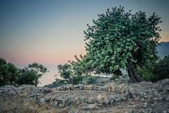 Sacred Place (A & A McKee) Tags: tree sea stones sky sunset water colours landscape loutro crete greece summer nikon dslr d500 beautiful rock sigma 1835 18 sfakia