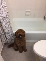Ruby Red's Tucker ready for bath time